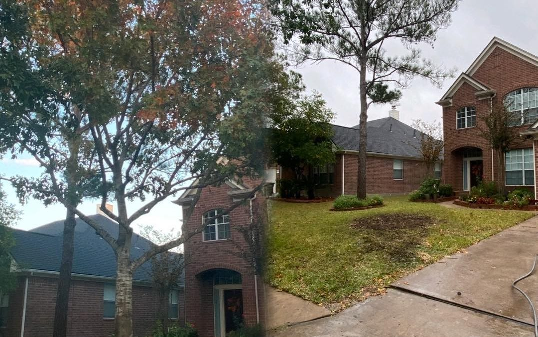 Tree Service Professionals in Briarforest, TX, Share Fall Tree Care Tips