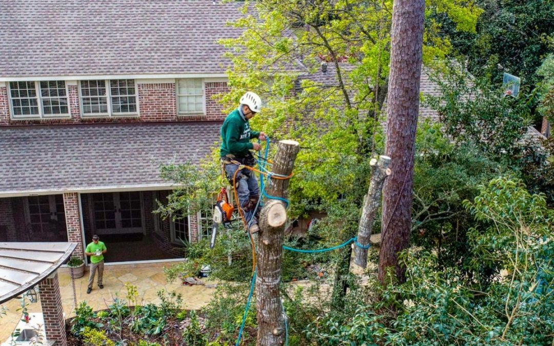Katy Texas Tree Experts Offer Tree Risk Assessment Services
