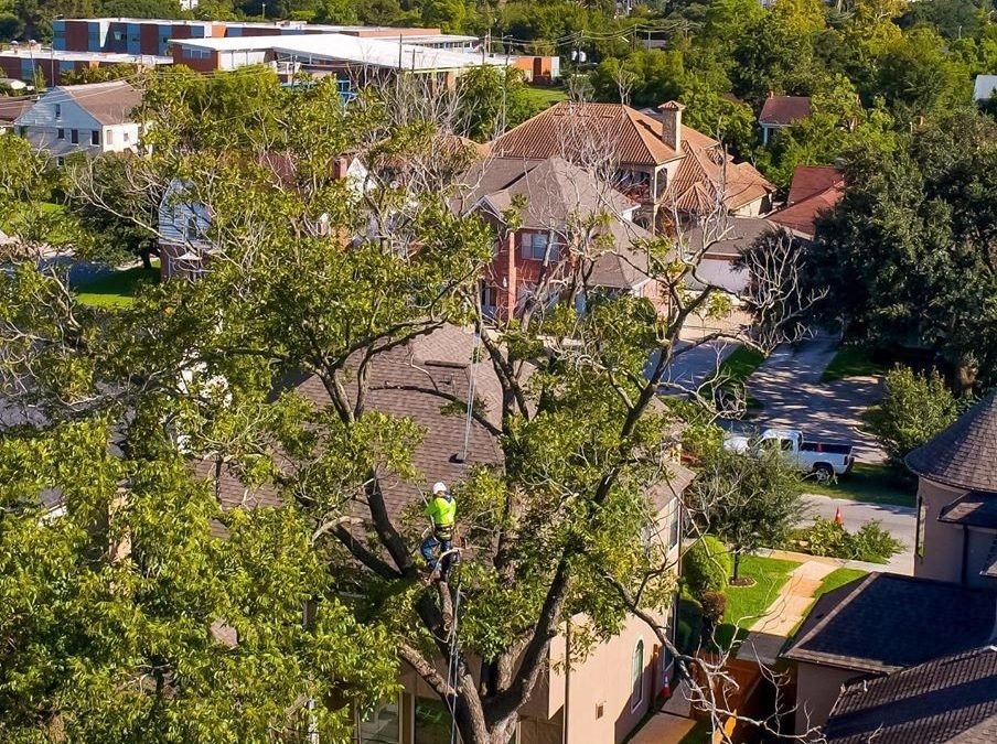 Katy Tx Certified Arborist Offers Expert Winter Pruning Services