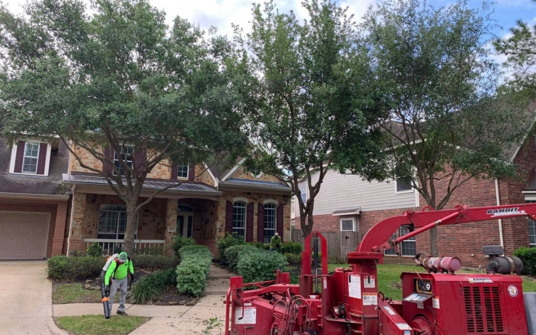 Tree Care Experts In Richmond TX Share Tree Trimming Tips