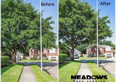 Meadows Before and After