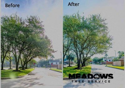 Meadows Tree Service Before and After