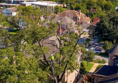 Tree Service Katy TX