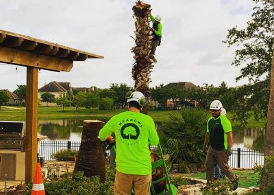 Tree Trimming Service in Katy TX