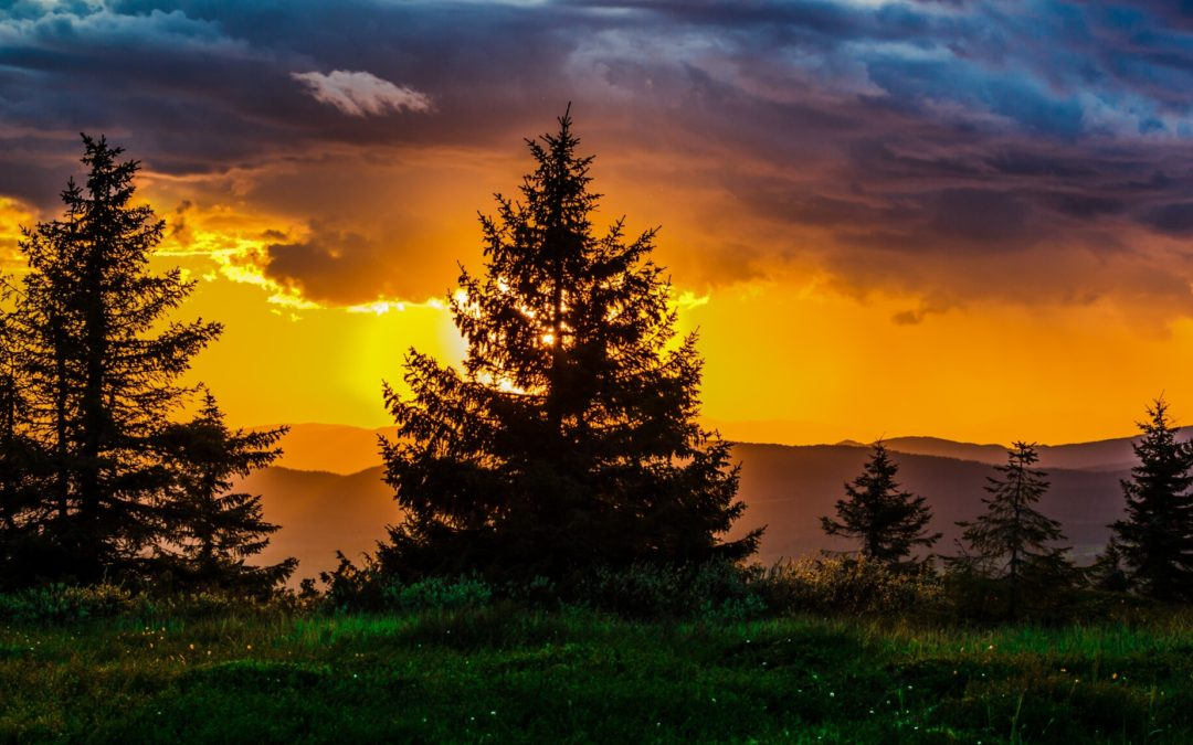 The Different Types of Evergreen Trees in Texas, Explained