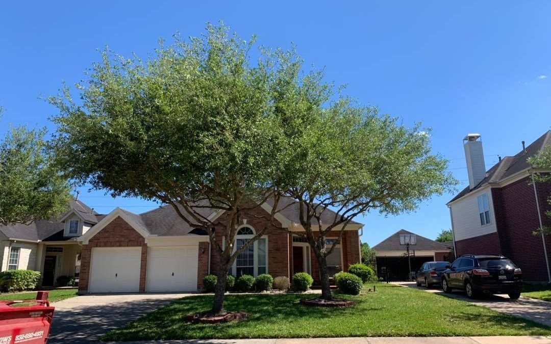 Meadows Tree Service Proudly Provides Richmond, TX Area With Quality Work