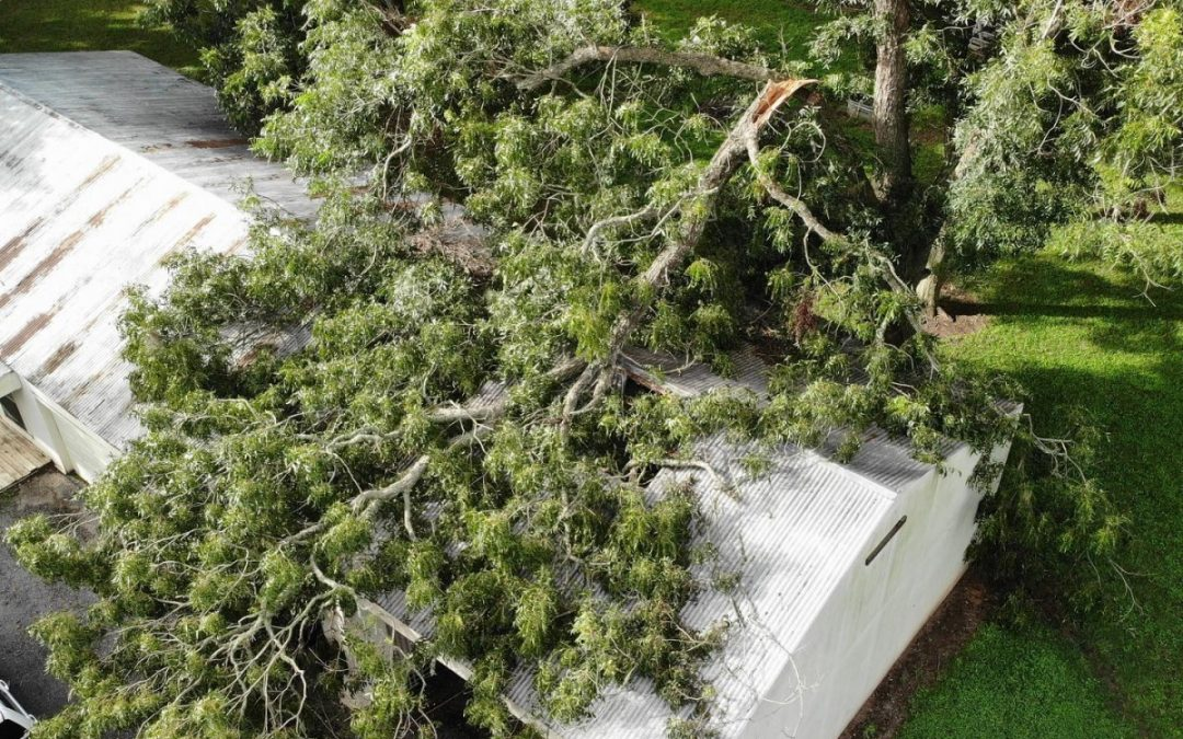 Local Arborist Offers Emergency Tree Removal Service In Fulshear TX
