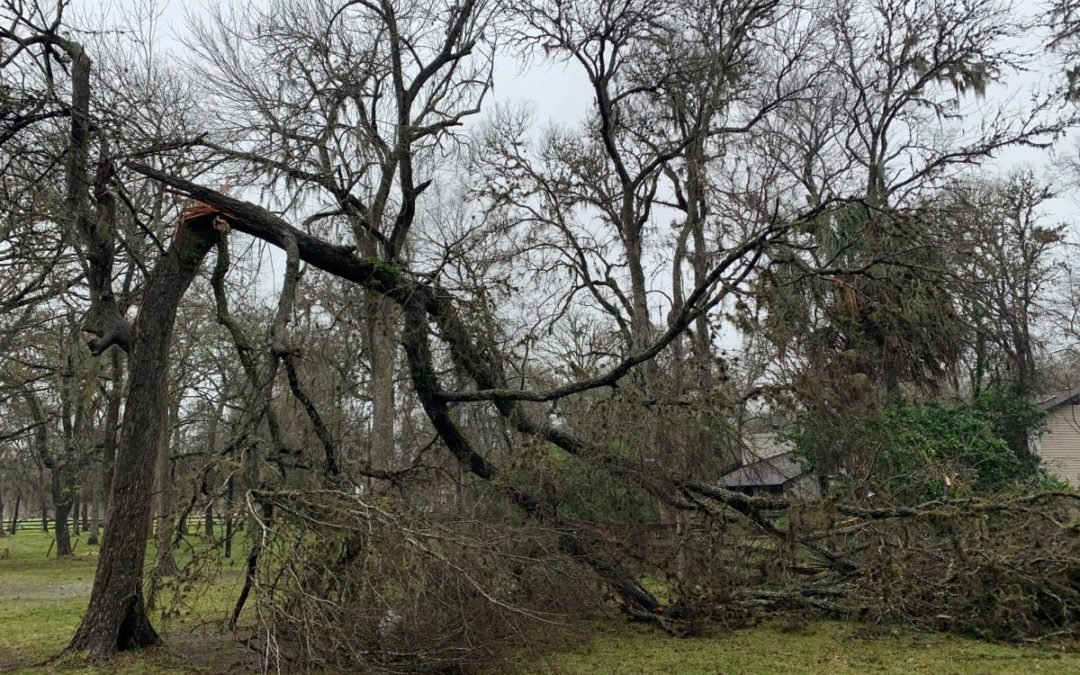 Meadow Tree Service Offers Routine and Emergency Tree Services