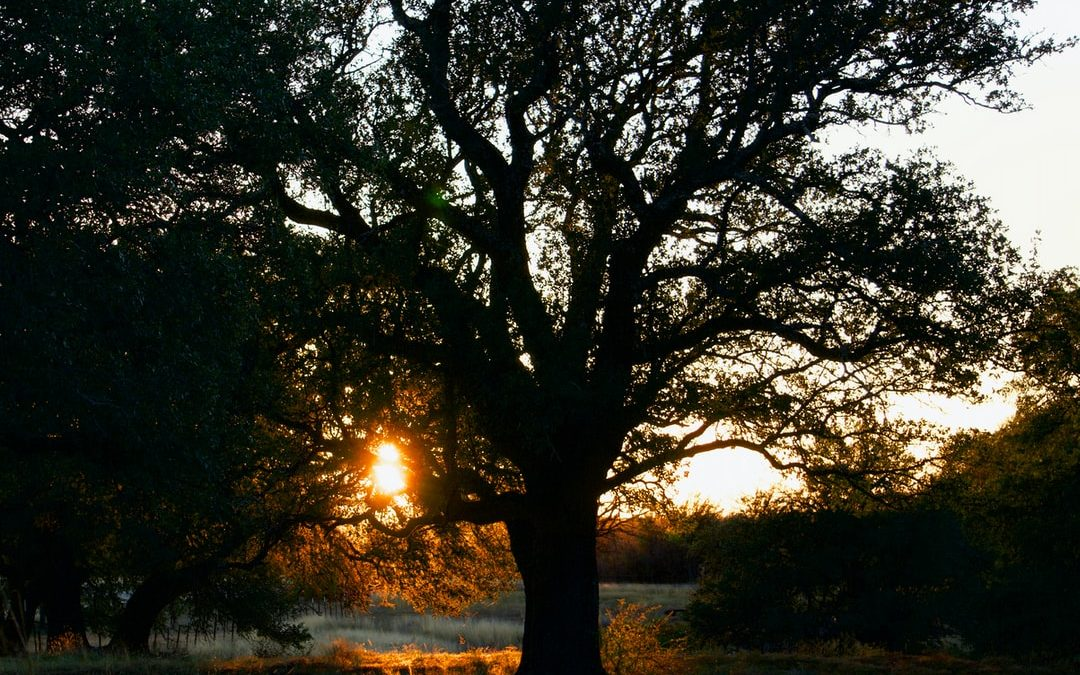 Tree Laws in Texas: A Quick Guide for Homeowners