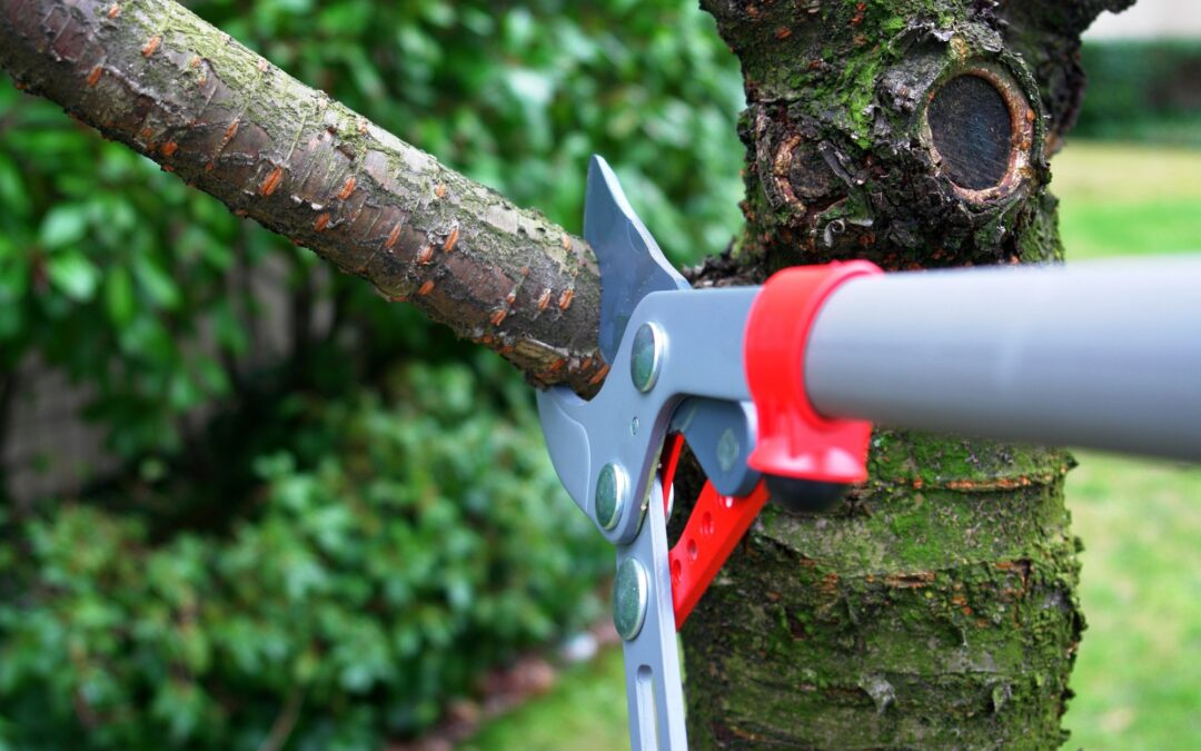 Tree Maintenance Tips for Healthy Trees Year Round
