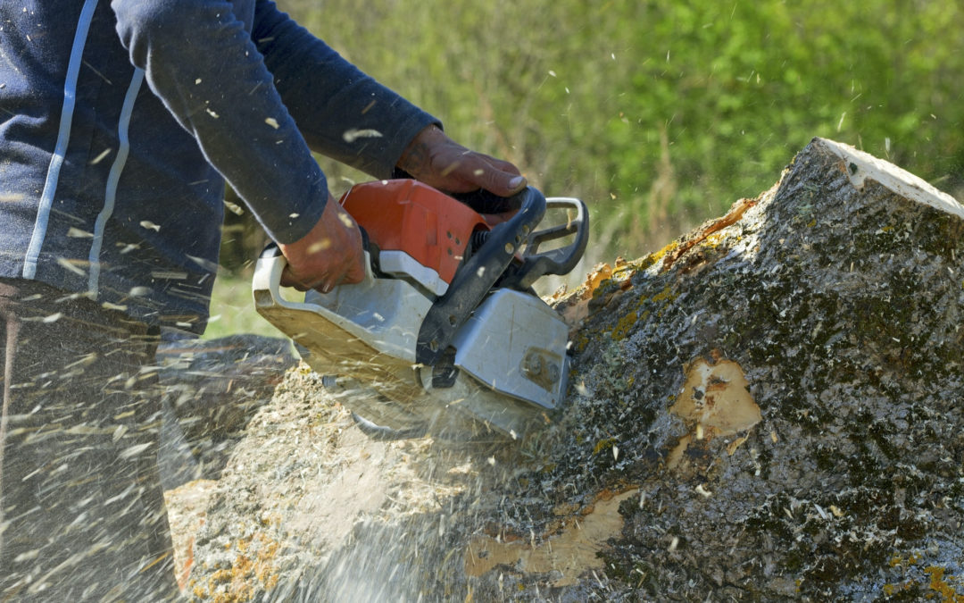 Everything to Consider When Choosing a Tree Removal Company