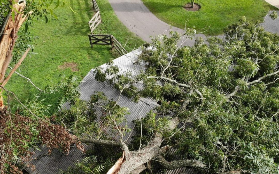Katy Tree Company Announces Emergency Tree Services For Residents